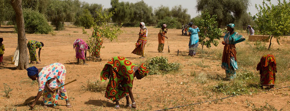 project cover great green wall unccd